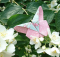 Create Beautiful Butterflies from Fabric