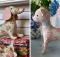 Kitten and Dachshund Patterns